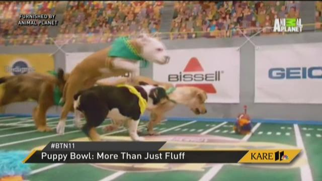 Puppy Bowl: More than just fluff