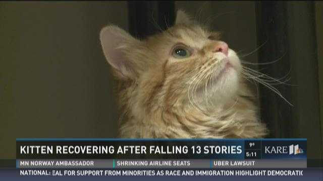 Kitten recovering after falling 13 stories