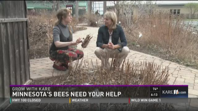 Grow: MN's bees need your help