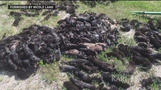 Sheriff: 40K mink release 'an act of domestic terrorism'