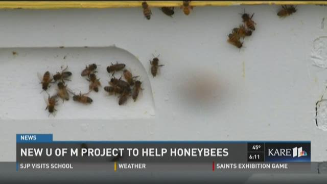 New U of M project to help honeybees