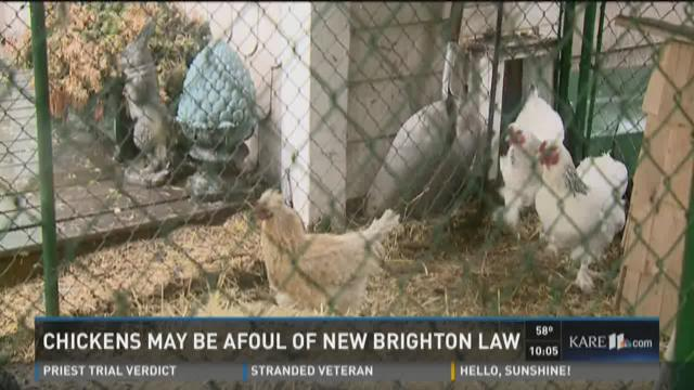 New Brighton allows chickens with restrictions