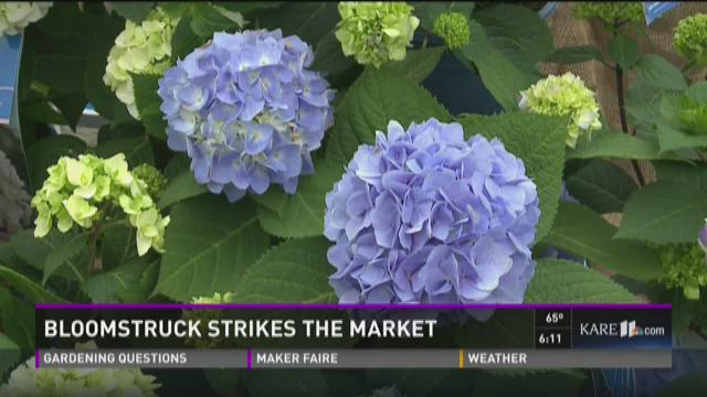 Grow with KARE: Bloomstruck strikes the market