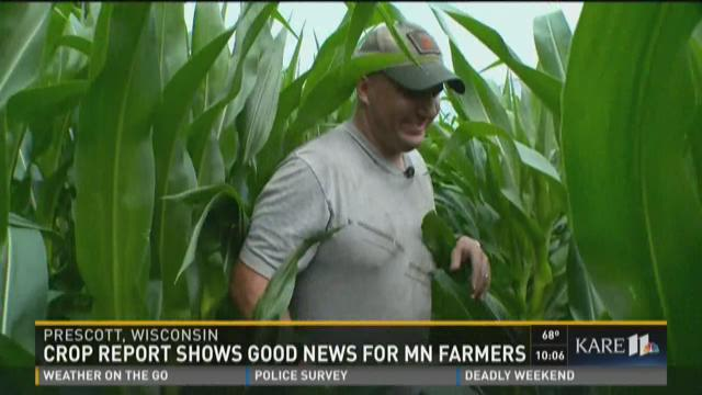 Crop report shows good news for MN farmers