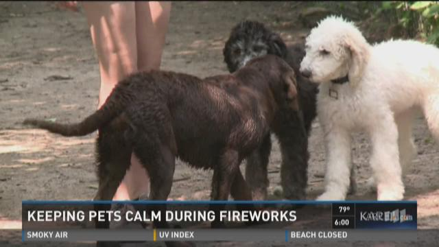 Keeping pets calm during fireworks shows