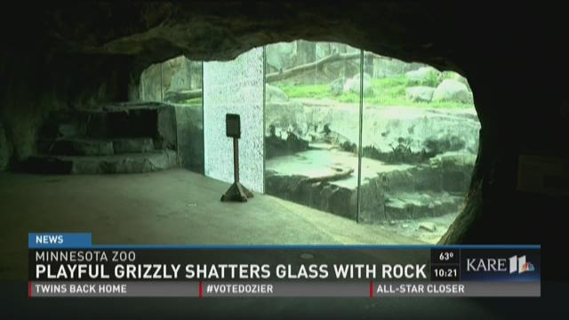 Grizzly bear damages glass at Minnesota Zoo