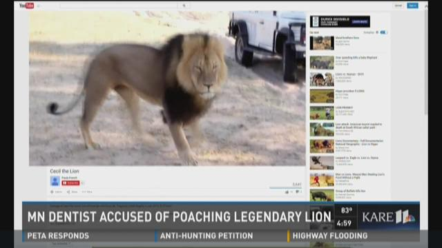 MN dentist accused of poaching legendary lion