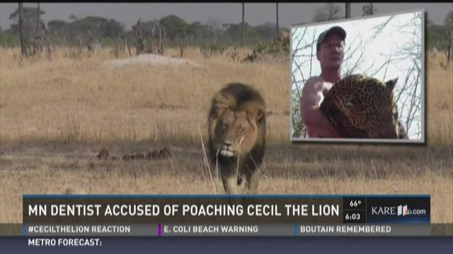 Protests planned for dentist who killed beloved lion