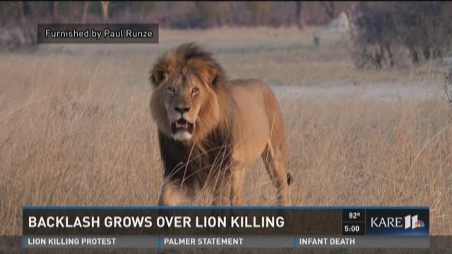 Backlash Grows Over Lion Killing
