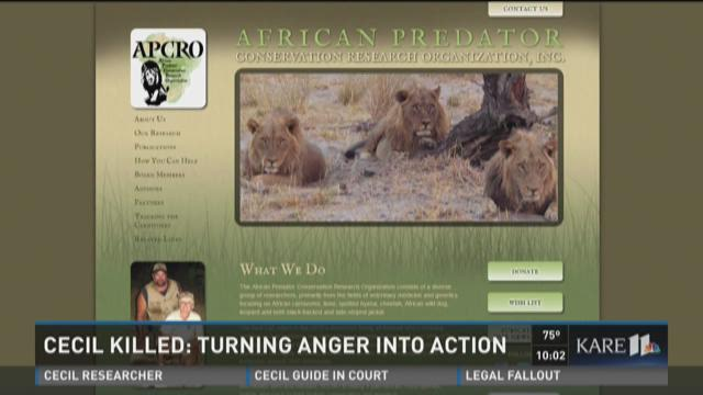 Cecil The Lion: Turning Anger into Action