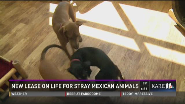 Mexican dogs find new homes in Minn.