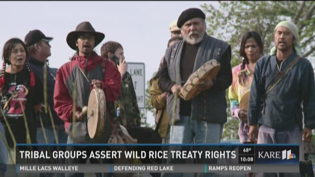 Tribal groups assert wild rice treaty rights