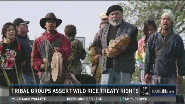 Tribal groups assert wild rice treaty rights