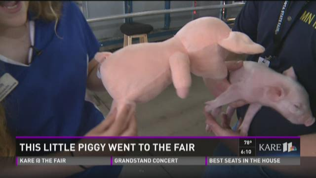This little piggy went to the fair