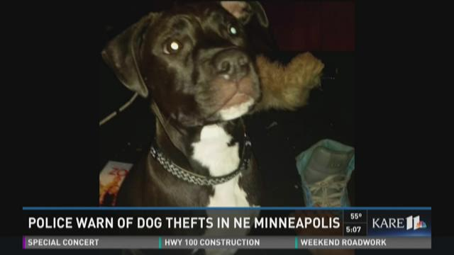 Police warn of dog thefts in NE Mpls.